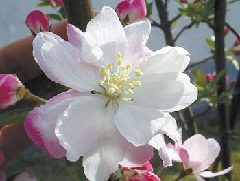 富贵满堂红花图片
