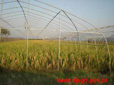 关键字:稻菜轮作,技术,有机质,土壤结构,改革文章摘要:稻菜轮作栽培